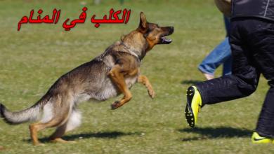 الكلب في المنام