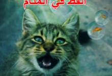 القط في المنام