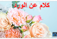 كلام عن الورد